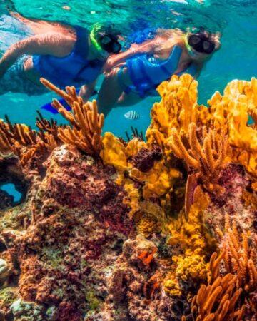 cropped-colored-reefs-snorkellers.jpg